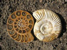 Antiguidades do mar