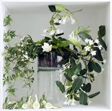Afbeeldingsresultaat voor bloeiende kamerplanten