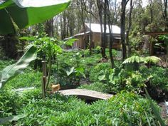 Food forest.