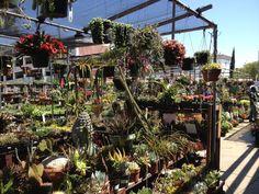 Sunset Nursery Nursery, Sunset, Plants, Sunsets, Room Baby, Baby Room, Planters, Babies Rooms, Plant