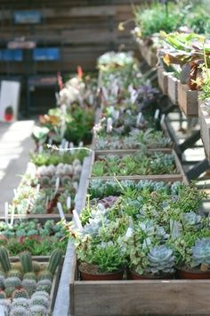 Little succulents all in a row at Terrain. | Image via: Flora & Fauna