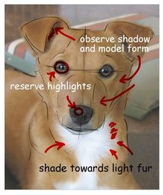 Learn How to Draw Your Dog's Portrait: Block in the Shadows