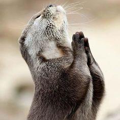 please God!!! by Nickkapfoto