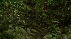Tropical Forest Congo - Africa S01E03