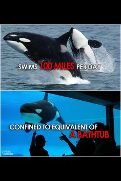 My eyes are finally opened, and as much as i would like to love Seaworld... SEAWORLD SUCKS. And they are shady characters #blackfish