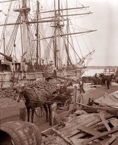 "Whaling Ship ""Sunbeam"", photo by Clifford W Ashley Old Pictures, Old Photos, Old Sailing Ships, Merchant Navy, Vintage Boats, Historical Images, Navy Ships, Ocean Life, Vintage Photographs"