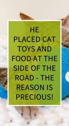 He Placed Cat Toys and Food at the Side of the Road – the Reason is Precious! Herbal Remedies, Health Remedies, Home Remedies, Natural Remedies For Heartburn, Natural Cures, Health Tips, Health Care, Avocado Health Benefits