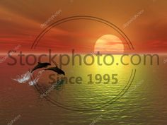 Stock photo of Sunset and dolphins - Sunset and dolphins Dolphins, Stock Photos, Sunset, Movie Posters, Film Poster, Sunsets, Common Dolphin, Billboard, Seal