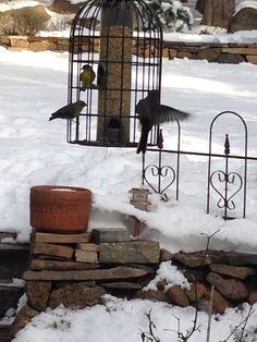 Winter feed!