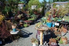 Plants Galore, Dig Nursery, Vashon Island, WA