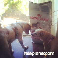 http://www.telepienso.com/products/royal-canin-medium-sterilised