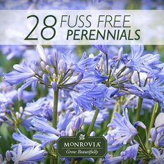 28 Fuss-Free Summer-Flowering Perennials. If you're looking to spend more of the summer enjoying your garden than working in it, here are some of our favorite low-maintenance, no pampering needed flowering perennials. Plant them in inspired combinations and once they're established, you can look forward to waves of color over a long season.