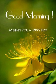 Sweet Good Morning Images, Good Morning Beautiful Pictures, Good Morning Roses, Good Morning Happy Sunday, Good Morning Texts, Good Morning Picture, Good Morning Good Night, Morning Msg, Good Morning Greeting Cards