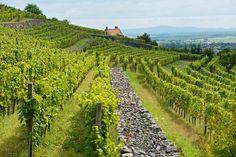 Izgalmas és egyedi szálláshelyek borkedvelőknek - Saját Otthon Projekt Vineyard, Outdoor, Outdoors, Vine Yard, Vineyard Vines, Outdoor Living, Garden