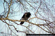 Portfolio Multimedeia: Kaksi varista, hilipatiheijaa