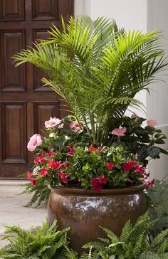 Majesty palm in center and in mandevilla and hibiscus surrounding its base. Majesty palm in center and in mandevilla and hibiscus surrounding its base. Patio Plants, Outdoor Planters, Indoor Plants, House Plants, Porch Planter, Plants By The Pool, Plants In Pots, Outside Planters, Green Plants