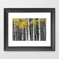 Yellow, Black, and White // Aspen Trees in Crested Butte Framed Art Print by The Blonde Dutch Girl