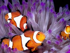 Great Barrier Reef Experience - Queensland. This tranquil oasis is located close to stunning Four Mile Beach and is perfectly placed for you to explore Port Douglas, the Great Barrier Reef and the nearby rainforest.