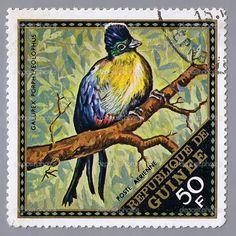 Bird on postage stamp of Guinea