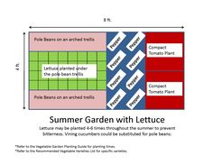 Like This But I Need More Tomatoes Winter Vegetables Gardening Vegetable Garden Layout Plan Garden Planning
