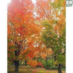 Vermont  ✨ Photographer  @pdriver✨  #ScenesofNewEngland  Pic of the Day  11.03.15 ✨ C o n g r a t u l a t i o n s ✨ ---------------------------------------- #scenesofVT  #southheroVT #igvermont #vermont_potd  #vermont_fallfoliage #vermont_explore #explorevermont #travelvermont  #fallinVT #fallingforfall #newenglandfallfoliage...