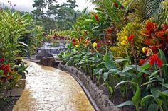 Tropical garden with waterfall - (#122462) - High Quality and Resolution Wallpapers on hqWallbase.com