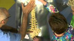 Про жизнь. Какие упражнения надо делать при появлении боли в спине? (25....
