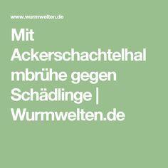 Mit Ackerschachtelhalmbrühe gegen Schädlinge | Wurmwelten.de