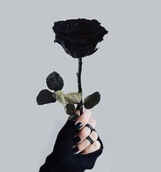 Image discovered by Find images and videos about black, flowers and rose on We Heart It - the app to get lost in what you love. Aesthetic Roses, Aesthetic Colors, Aesthetic Photo, Aesthetic Pictures, Black Aesthetic Wallpaper, Aesthetic Iphone Wallpaper, Aesthetic Wallpapers, Rose Foto, Black And White Aesthetic