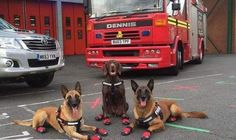 The unmentioned Heros going in Grenfell tower block to search for bodies. Please share give them the thanks they deserve! 🐶🚒