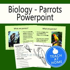 This product is a Power Point presentation on Parrots. It includes a Power Point show and two worksheets. One worksheet is multiple choice and T/F questions. The other is a coloring page for students to make their own colorful parrots.Thank you!