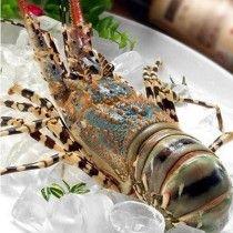 Tôm hùm - Siêu thị hải sản KB 1