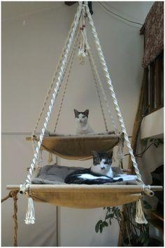 confort du chat/ jeux /décoration intérieur