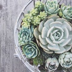 we are so excited to finally announce that our DIY Succulents BOOK is now available for pre-order on Amazon! please check out our most recent blog post for more info!!!! ::link in profile::