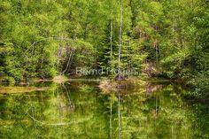 """""""the mirrored forest"""" von Bernd Hoyen #fotografie #photography #fotokunst #photoart #digitalart #wald #wälder #forest #forests #grün #green #baum #bäume #tree #trees #see #seen #sea #seas #spiegelung #spiegelungen #reflection #reflections #wasserspiegelung #wasserspiegelungen #natur #nature #landschaft #landschaften #landscape #landscapes #deutschland #germany #saarland"""