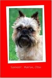 SPENCER: Are you ready to fall in love? is an adoptable Brussels Griffon Dog in Marion, OH. Hard to believe this adorable 5 yr. old, 10 lb. little guy came to us from a puppy mill auction. He wants li...
