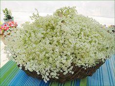 Tout sur le sureau ! Edible Plants, Permaculture, Healthy Drinks, Trees To Plant, Flower Power, Natural Remedies, Bouquet, Herbs, Flowers