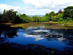 picture of Laguna de Lotos en Parque Saval