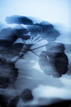 Blue Mood | Flickr - Photo Sharing!