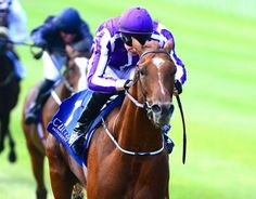 Brilliant Australia retired to stud at Coolmore http://www.racingfuture.com/