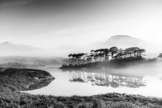 Dawn at Derryclare, Connemara - Derryclare lake and pine island, Connemara, in the early light of dawn. Connemara, Pine Island, Photo Competition, Daily Photo, Amazing Photography, Dawn, Monochrome, Cool Photos, Scene