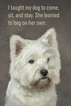 Everyone loves the lovable Westie. See move special pets at:  https://www.etsy.com/listing/222538103/custom-pet-portrait-a-digitally-painted?ref=shop_home_active_4