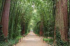 Anduze : bambous et séquoias