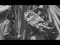 "How Bananas are Grown: ""About Bananas"" 1935 United Fruit Company; Castle Films https://www.youtube.com/watch?v=RXc6ED-jMeU #bananas #fruit #Chiquita"