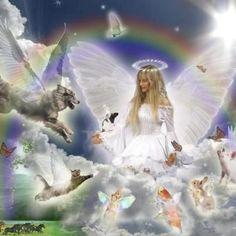 Animals And Pets, Cute Animals, Pet Loss Grief, Pet Remembrance, Angel Pictures, Dog Memorial, Rainbow Bridge, Losing A Pet, Pet Memorials