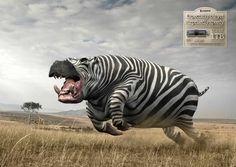 Kingston USB 3.0 1TB: Hippo-Zebra