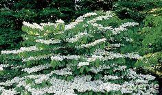 Plantas con flores en invierno