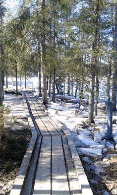 Puusta rakennettuja polkuja pitkin on helppo liikkua pyörätuolillakin