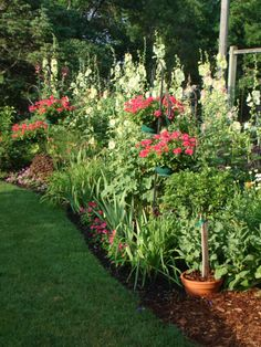 Hollyhocks On Pinterest Cottage Gardens Flower Seeds