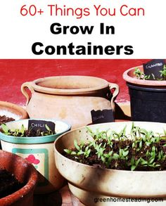 60+ Things You Can Grow In Containers, Without a Garden